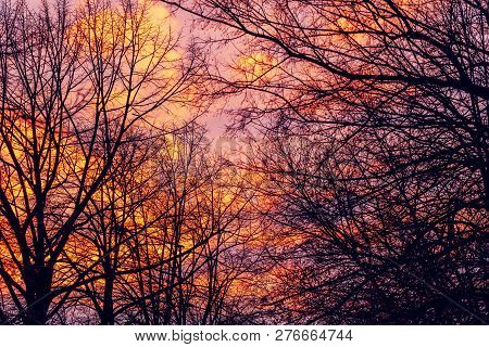Bare Treetops And Winter Sunset Sky, Amazing Beautiful Cold Season Scenery In Dusk