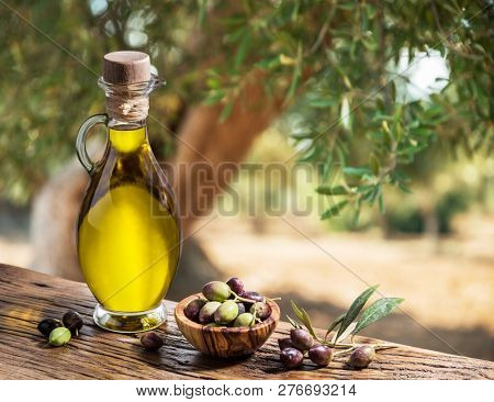 Bottle of olive oil and olive berries are on the wooden table under the olive tree.