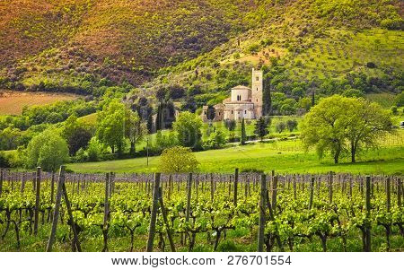 Sant Antimo, Castelnuovo Abate Montalcino church, vineyards and secular olive tree. Tuscany, Italy, Europe poster