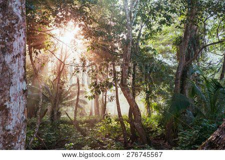 Beautiful green tropical jungle