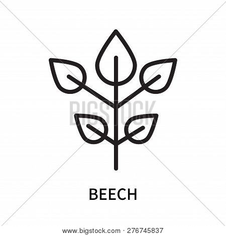 Beech Icon Isolated On White Background. Beech Icon Simple Sign. Beech Icon Trendy And Modern Symbol