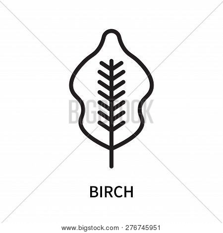 Birch Icon Isolated On White Background. Birch Icon Simple Sign. Birch Icon Trendy And Modern Symbol