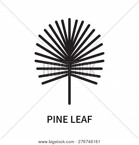 Pine Leaf Icon Isolated On White Background. Pine Leaf Icon Simple Sign. Pine Leaf Icon Trendy And M