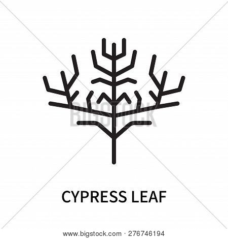 Cypress Leaf Icon Isolated On White Background. Cypress Leaf Icon Simple Sign. Cypress Leaf Icon Tre