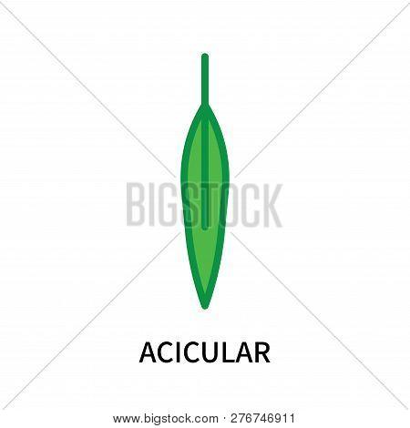 Acicular Icon Isolated On White Background. Acicular Icon Simple Sign. Acicular Icon Trendy And Mode