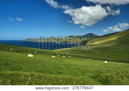 Panoramic view of the west coast of Ireland. In the foreground you can some sheeps, green grass, cliffs, blossoms, in the background there ist the sea with the coast an some waves and spray poster