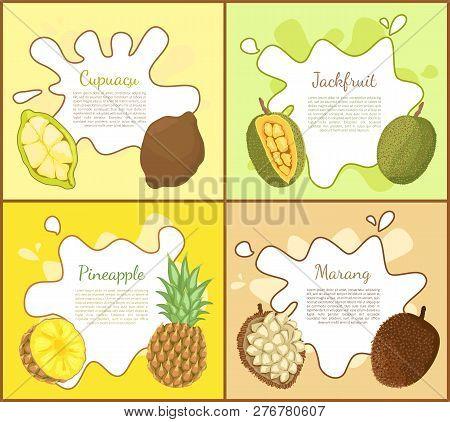 Cupuacu And Jackfruit, Posters Set With Editable Text Sample. Pineapple Tropical Fruit Slice, Marang
