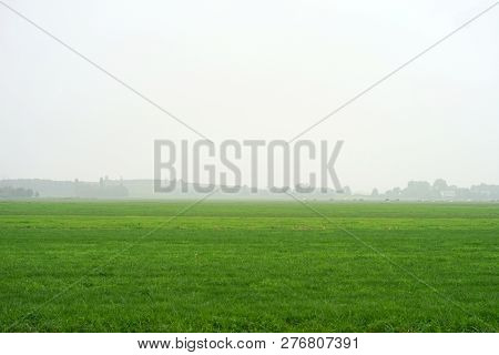 Landscape Of Misty Morning Field. Cows In A Foggy Field. Misty Landscape In The Netherlands.