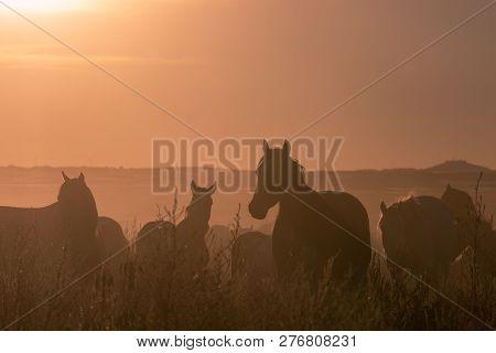Wild Horses In The Sunset In The Utah Desert