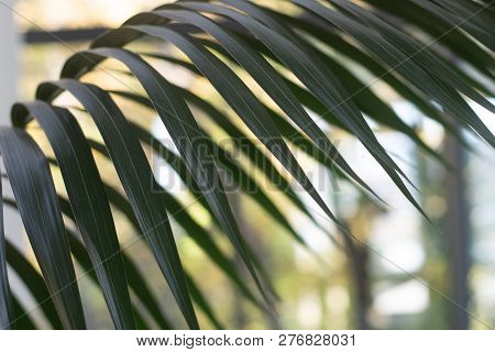 Palm Tree Closeup Leaves With Bokeh Background