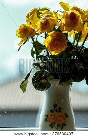 Wilted Yellow Roses In Vase In Window Light. Vase With Yellow Roses. Flowers At The Window. Yellow R