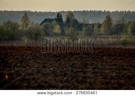 Spring Landscape With Plowed Field. Plowed Cereal Field With Mist In Spring. Classic Rural Landscape