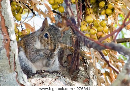 Fall Harvest Crw_2134