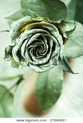 Stoned rose
