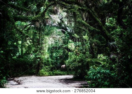 Late Morning View Of Dirt Road  Inside Of A Subtropical Jungle Wilderness Area In Estero Florida, St