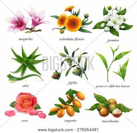 Medicinal Plants And Flavors. Magnolia, Calendula Flower, Jasmine, Aloe, Jojoba, Tea, Rose, Argania,