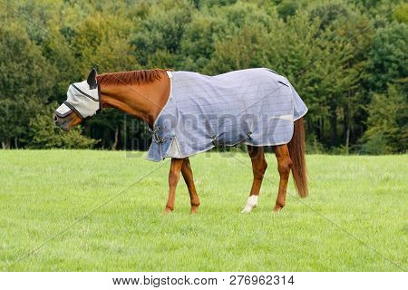Brown Horse In A Field Wearing A Fly Mask