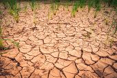 Arid landscape Cracked ground dry land during the dry season in rice field agriculture area natural disaster damaged agriculture - broke soil texture and dry mud arid poster