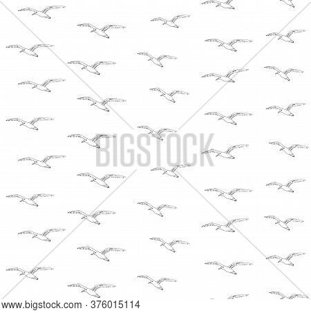 Vector Seamless Pattern Of Hand Drawn Doodle Sketch Seagull Flock Isolated On White Background