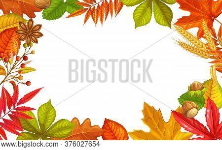 Seasonal Fall Frame With Autumn Foliage Of Maple, Oak, Elm, Chestnut And Autumn Berries. Fall Foliag