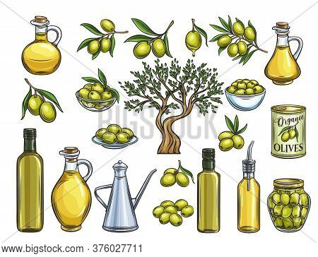 Hand Drawn Colored Olives, Tree Branches, Glass Bottle, Jug , Metal Dispenser And Olive Oil. Vector