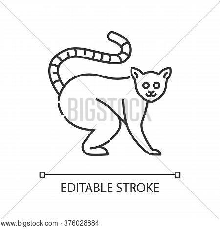 Ring Tailed Lemur Pixel Perfect Linear Icon. Native Madagascar Inhabitant Thin Line Customizable Ill