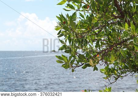 View Of The Atlantic Ocean From Biscayne National Park In Homestead, Florida, Water View Of The Ocea