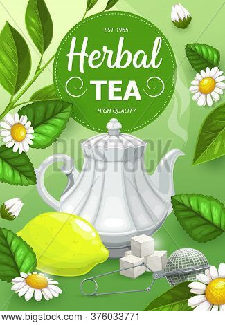 Herbal Tea With Chamomile And Mint Leaves Flavor, Vector Hot Drinks And Herbs. Chamomile And Mint He