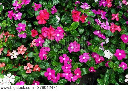 Colorful Watercress Flower Blooming Garden Nature Background