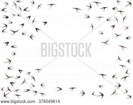 Flying Swallow Birds Silhouettes Vector Illustration. Migratory Martlets Swarm Isolated On White. Fa