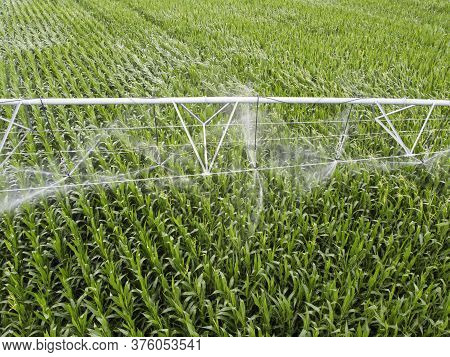 Irrigation Of Corn, Irrigation System For Watering Crops In The Fields. Agriculture With Irrigation
