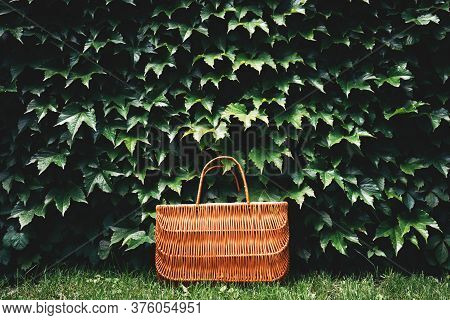 Rattan Eco Basket For Food Or Lunch In The Garden Among Plants. Eco-friendly Concept Of Consumption