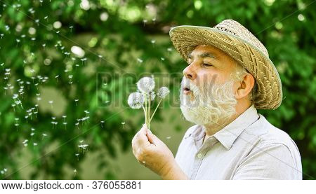 Lonely Grandpa Blowing Dandelion Seeds In Park. Mental Health. Peace Of Mind. Peacefulness. Tranquil