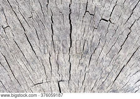 Cross Section Of Tree Trunk Log Showing Growth Rings With Radial Symmetrical Cracks, Textured Stump
