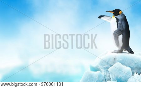 King Penguin In An Iceberg Pointing Its Flipper Wing To Empty Space