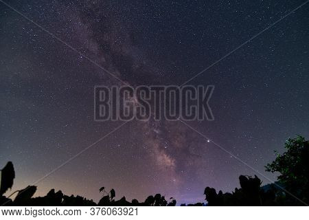 Night Sky View Of The Galactic Core Of The Milky Way Galaxy With Silhouetted Leaves In The Foregroun