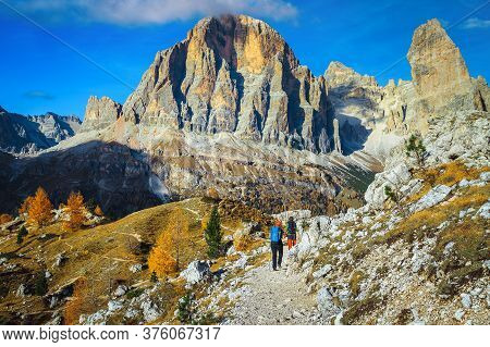 Hikers On The Hiking Trail In The Dolomites. Yellow Larches And Spectacular Tofana Di Roses Mountain