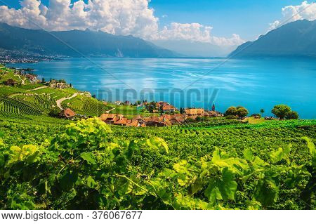 Picturesque Vineyards On The Slopes Near Rivaz Village. Beautiful Agricultural Landscape With Vineya