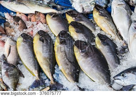 Different fish on open fish market in Hurghada city, Egypt