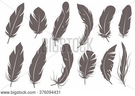 Feather Silhouettes. Different Feathering Birds, Graphic Simple Shapes Pen Decorative Elements, Gray