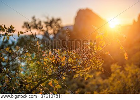 Selective Focus. Autumn Foliage And Sea Landscape With Warm Sunset Light Over A Rocky Coastline Calm