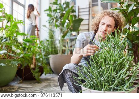 Young florist or gardener trainee taking care of a green plant
