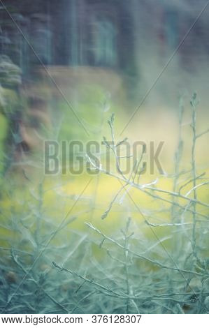 Abstract Floral Vertical Background. Blurred Twigs And Sprigs. Green Natural Background. Mysterious
