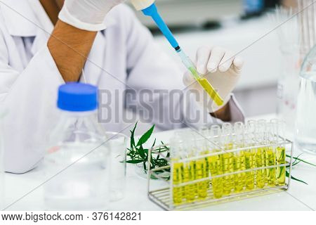 Scientist In Laboratory Testing Cbd Oil Extracted From A Marijuana Plant. Healthcare Pharmacy From M