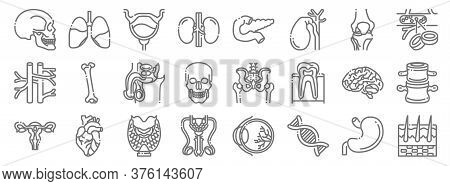 Human Organs Line Icons. Linear Set. Quality Vector Line Set Such As Skin, Dna, Reproductive, Uterus