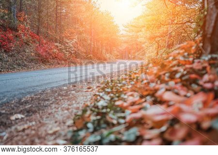 Autumn Forest. Mystic Charming Enchanting Landscape With A Road In The Autumn Forest And Fallen Leav