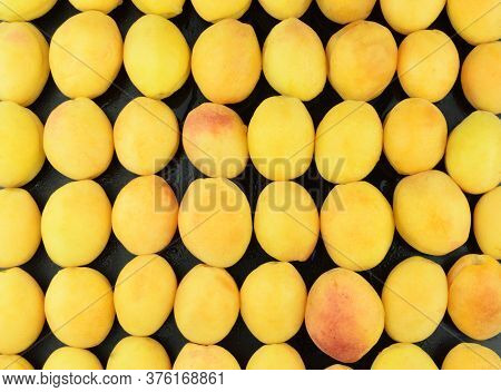 Apricots Background. Apricots Laid Out In Order For A Fruit Background With Copy Space. Growing Apri
