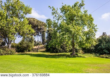 Israel. Large green grassy meadow in the center of the park. The magnificent botanical park on the slopes of Mount Carmel. Great walk in a clean well-kept park