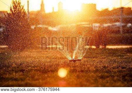 Lawn Sprinkler Spraying Water Over Fresh Lawn Grass In A City Park In The Setting Sun