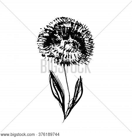 Textured Hand Drawn Chinese Black Ink Dandelion Flower. Grunge Sketch Vector Inky Floral Summer Blos